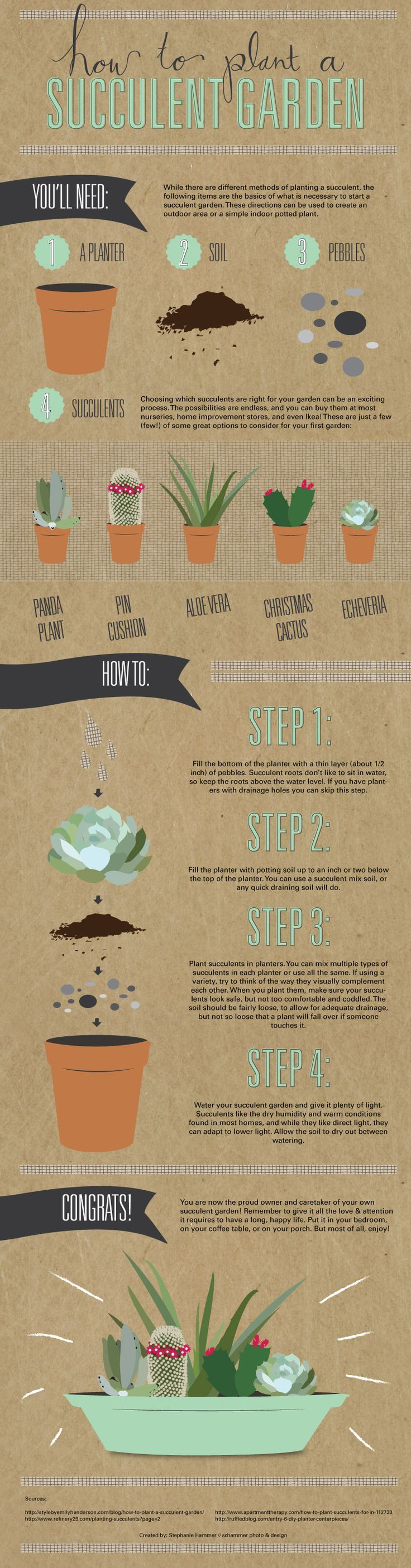 Succulent planting infographic
