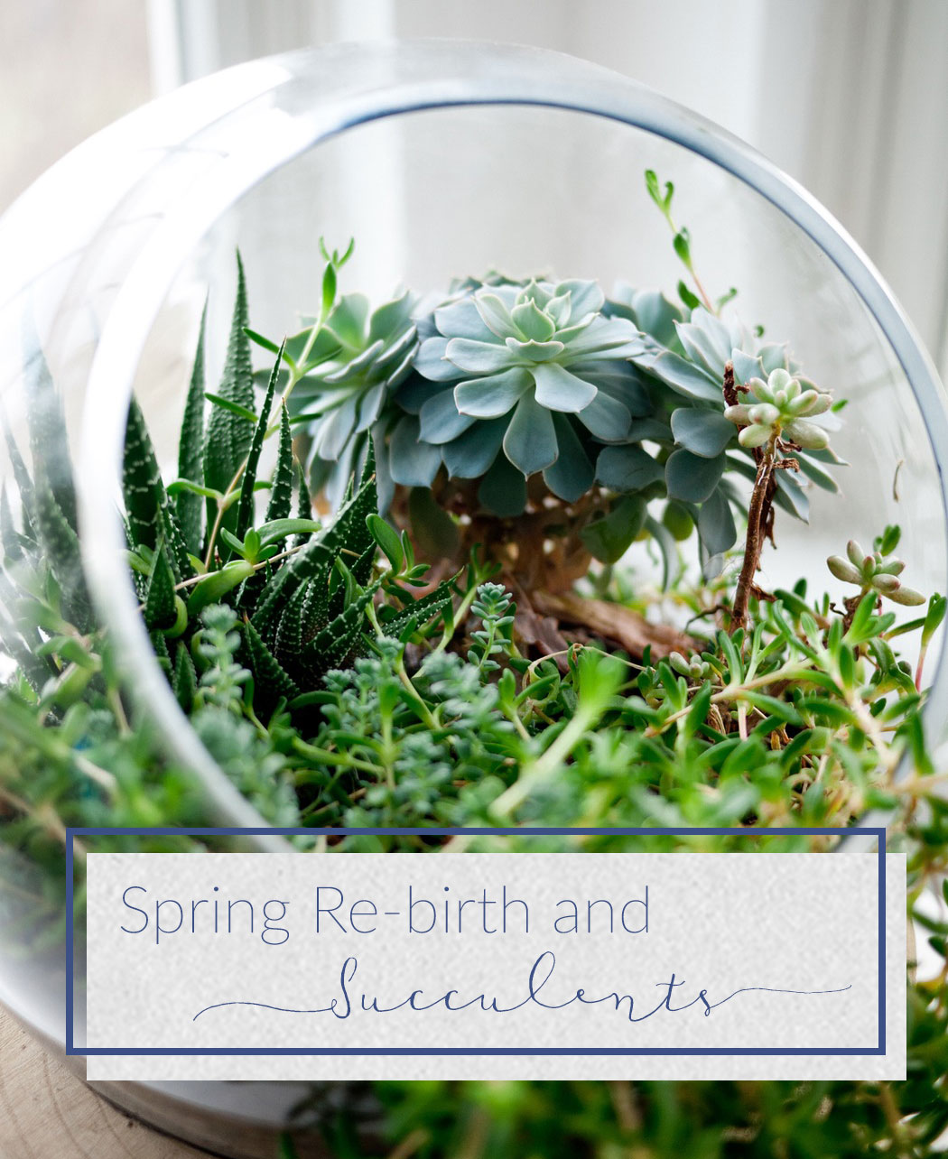 Spring Re-birth and Succulents