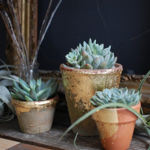 Succulents_in_Terra_Cotta_Pots